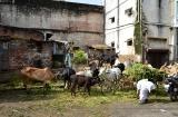 ahmedabad_matinee-3