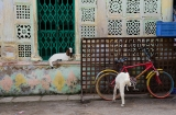 ahmedabad_mosquee_tombeaux_marche-9b