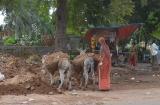 ahmedabad_ville-6