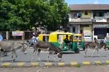 ahmedabad_ville-7