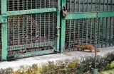 ahmedabad-zoo-2