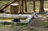 ahmedabad-zoo-3