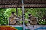 ahmedabad-zoo-7