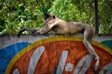 ahmedabad-zoo-8