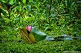 kochi_backwaters_balade-4