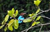 kochi_backwaters_oiseaux-1