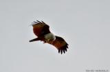 kochi_backwaters_oiseaux-14