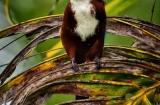kochi_backwaters_oiseaux-2