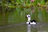 kochi_backwaters_oiseaux-9
