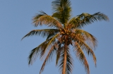 goa_vagator_beach-4