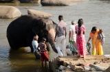 hampi_baignade_elephante-3
