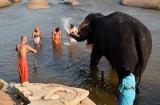 hampi_baignade_elephante-3b