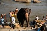 hampi_baignade_elephante-4