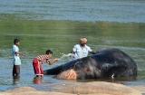 hampi_baignade_elephante-6b