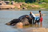 hampi_baignade_elephante-6c