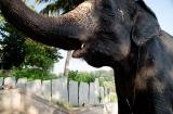 hampi_baignade_elephante-8a