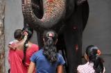 hampi_elephante_lakshmi-3