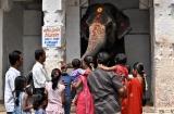 hampi_elephante_lakshmi-4