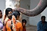 hampi_elephante_lakshmi-6c