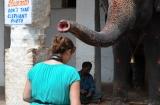 hampi_elephante_lakshmi-7c