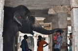 hampi_elephante_lakshmi-9d