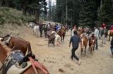 kashmir_perhagam_descente_cheval-2