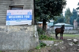 kashmir_perhagam_cheval-1