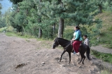 kashmir_perhagam_cheval-2
