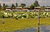 kasmir-srinagar-le-lac-balade-2