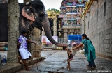 madurai-temple-minakshi-elephant-2