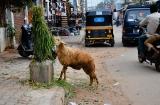 mysore_quartier_musulman-3c