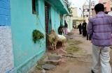 mysore_quartier_musulman-4