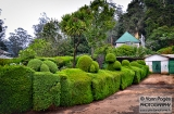 ooty_jardin_botanique-1a