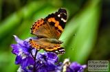 ooty_jardin_botaniquec-3