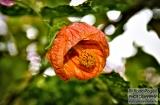 ooty_jardin_botaniquee-3