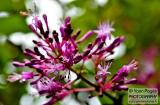 ooty_jardin_botaniquee-4