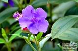 ooty_jardin_botaniquef-3