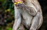 ooty_deuxieme_arret_singes-1c