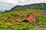ooty_plantations_the-0