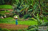 ooty_paysannes_champs-2