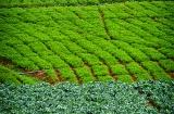 ooty_village_dejeuner_verdure-1