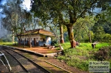 ooty_gare_aux_singes-1