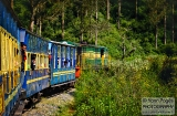 ooty_paysages_et_train-1