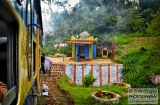 ooty_paysages_et_train-9