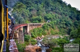 ooty_paysages_et_train-9g