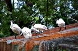 ahmedabad-zoo-5