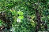 kochi_backwaters_matin-3b