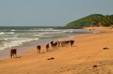 goa_anjuna_beach-4bis