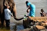 hampi_baignade_elephante-3e