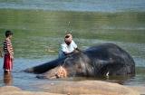 hampi_baignade_elephante-6